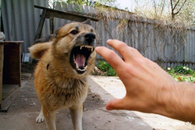 Собака кусает за руку: к чему снится, сонник, толкование сна