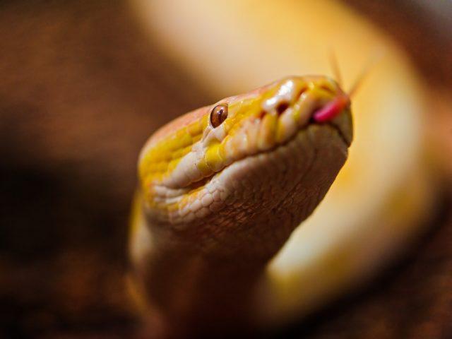Желтая змея во сне: к чему снится, что значит