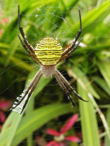 Примета: паук на голове, шее, лице, на левой и правой руке, в волосах