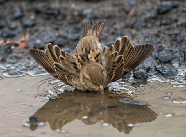 Примета: мертвая птица на пороге дома, в доме, на участке, упала под ноги